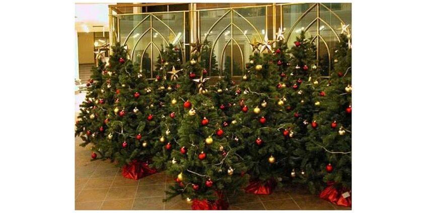Где лучше купить елку на Новый Год?
