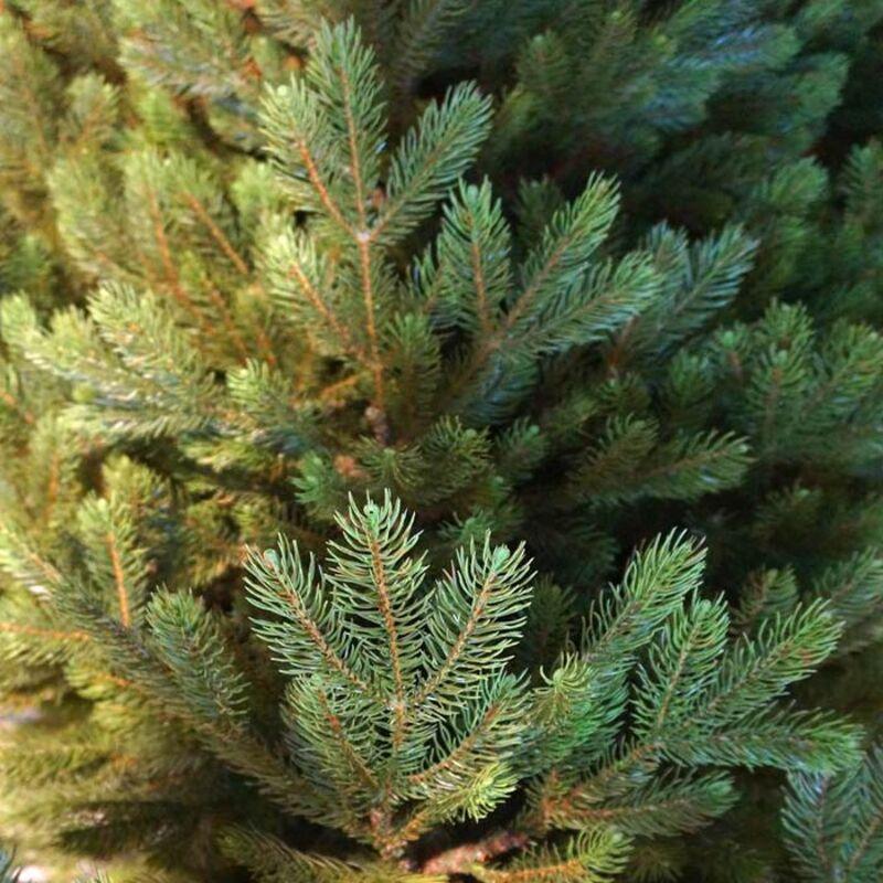 Искусственная Елка Black Box Коттеджная зеленая 305 см 960 лампы 74361 Фото 2